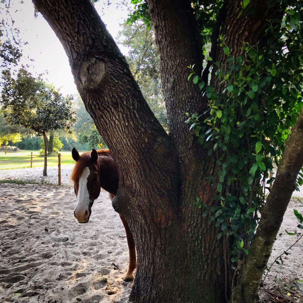 horse hiding behind a tree
